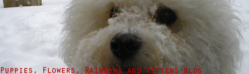 puppies, flowers, rainbows and kittens blog